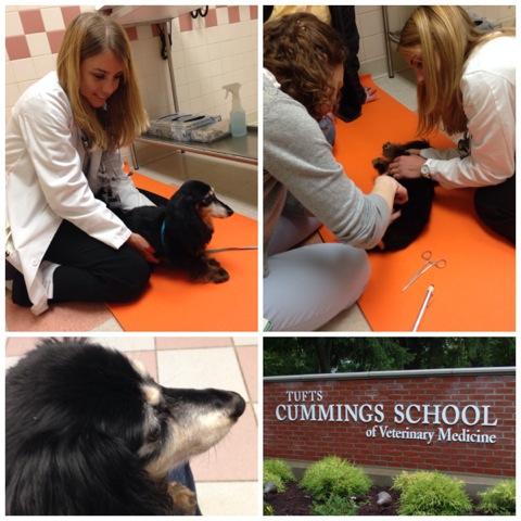 Teldra Visits the Neurosurgeons at Tufts Veterinary School